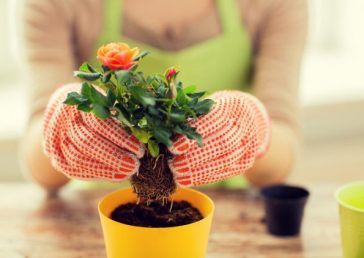 Cultivating Happiness: 6 Ways Gardening Enhances Mental Health