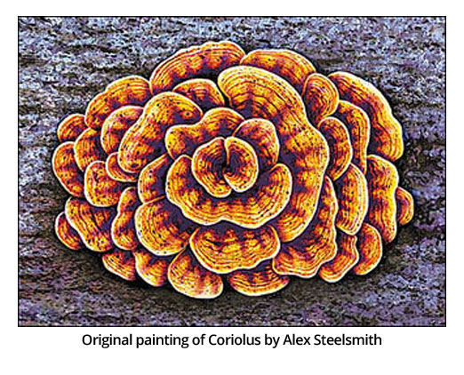 Original painting of Coriolus by Alex Steelsmith